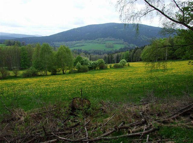 Zatím zdravé lesy v údolí Křemelné