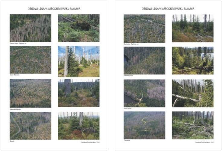 Obnova lesa - Šumava